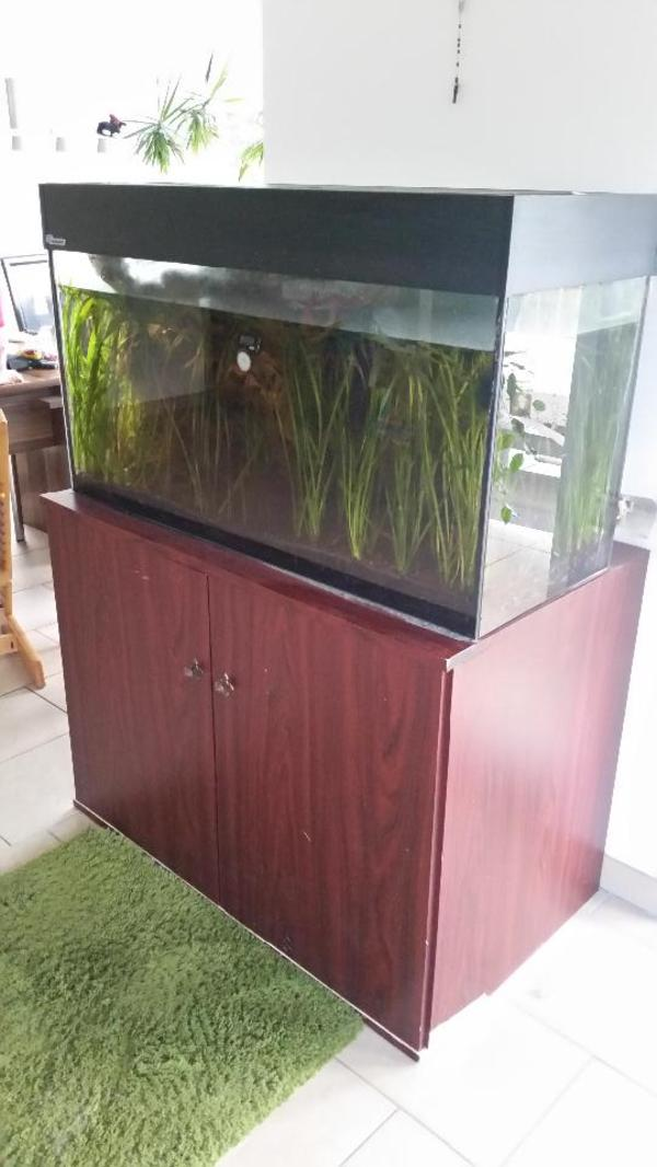 100x40x50 aquarium mit unterschrank und beleuchtung in oberstenfeld fische aquaristik kaufen. Black Bedroom Furniture Sets. Home Design Ideas
