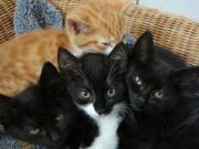 13 Babykatzen niedliche