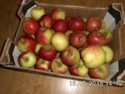 19 kg Äpfel