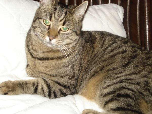 2 liebensw rdige katzen zu verschenken in berlin kaufen for Schlafsofa zu verschenken berlin
