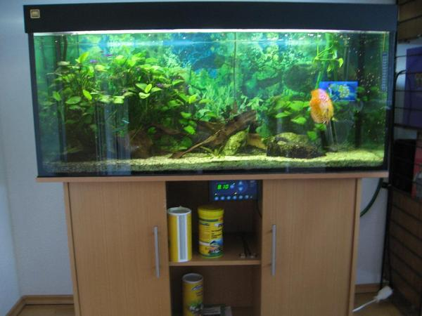 240 l aquarium komplett eingerichtet mit rotem diskus. Black Bedroom Furniture Sets. Home Design Ideas