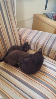 3 süsse Katzenbabays
