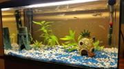 60liter Aquarium