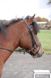 7 - jähriger Pony-