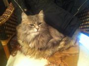 8 jährige Katzendame