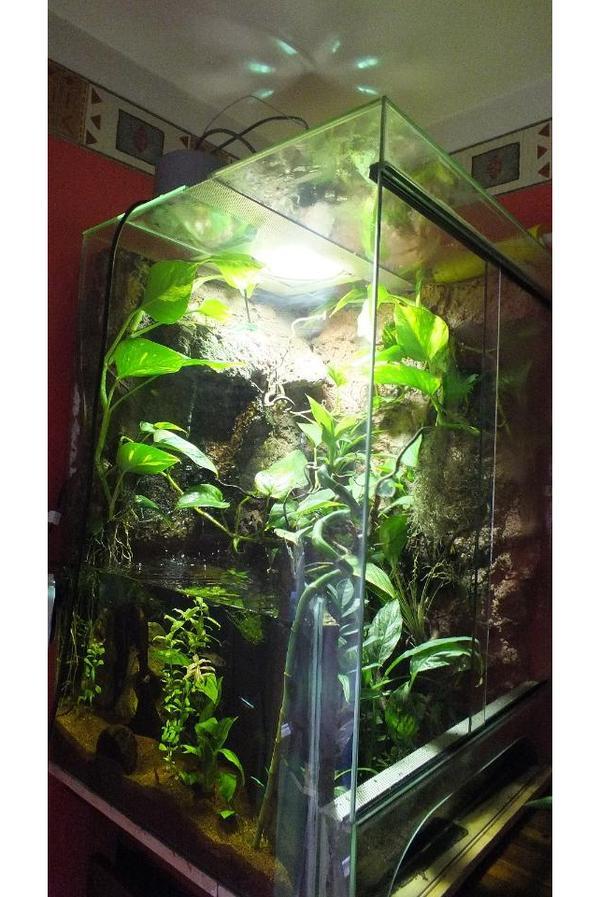 aqua terrarium paludarium in erlangen reptilien. Black Bedroom Furniture Sets. Home Design Ideas
