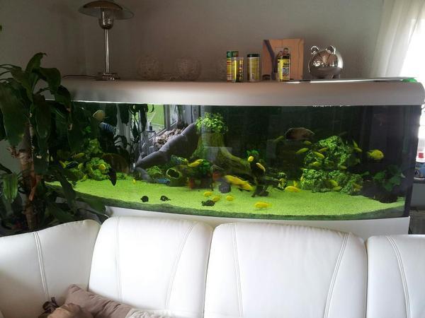 aquarium 1000 liter in aalen fische aquaristik kaufen und verkaufen ber private kleinanzeigen. Black Bedroom Furniture Sets. Home Design Ideas