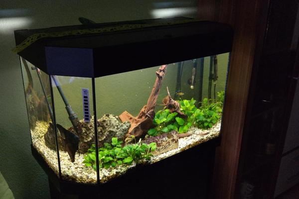 aquarium 150 liter mit zubeh r unterschrank und fischen in renchen fische aquaristik kaufen. Black Bedroom Furniture Sets. Home Design Ideas