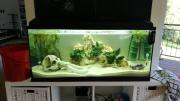 Aquarium 180l incl.