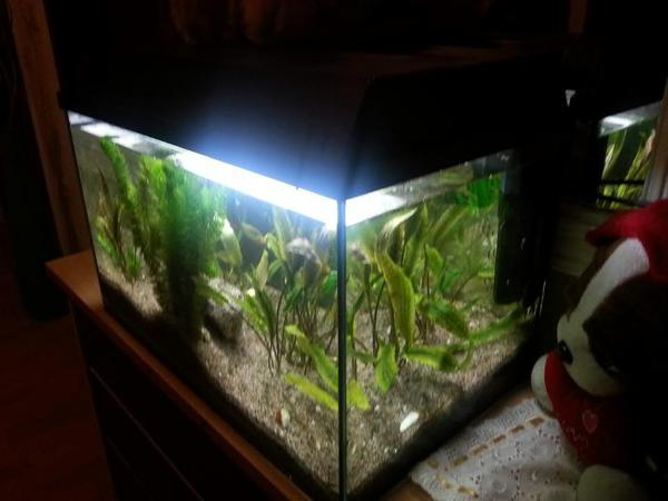 Aquarium fische zubeh r in neunkirchen bei mosbach for Teichfische ohne pumpe