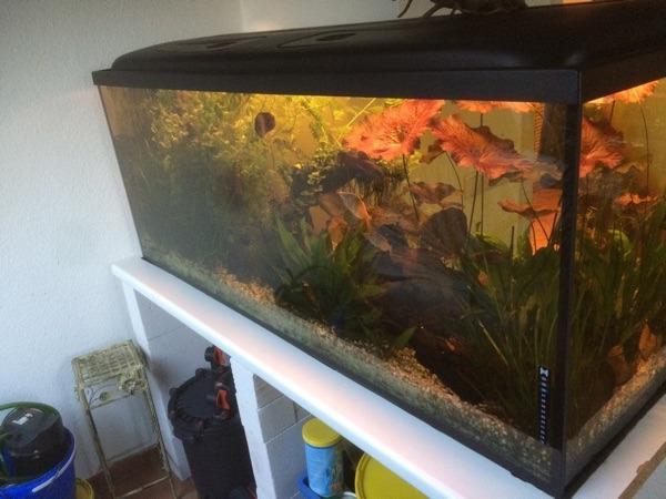 aquarium 500l komplett set fluval fx 5 top zustand in quickborn fische aquaristik kaufen und. Black Bedroom Furniture Sets. Home Design Ideas