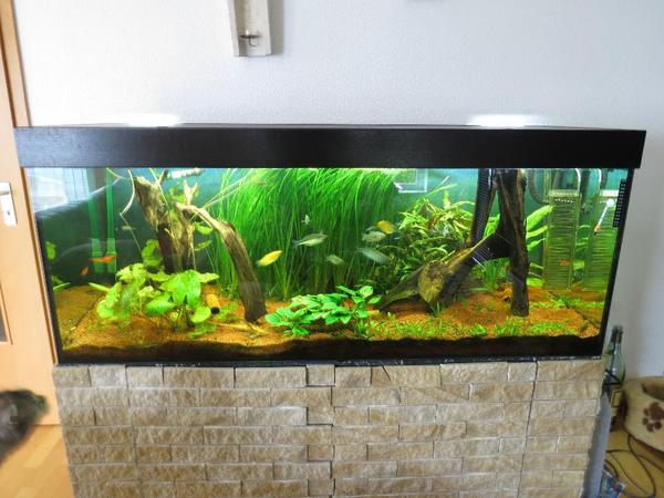 aquarium 600l f r einen guten zweck in gro bottwar fische aquaristik kaufen und verkaufen. Black Bedroom Furniture Sets. Home Design Ideas