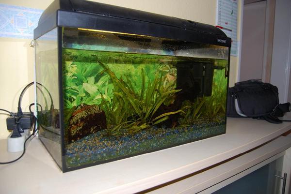 aquarium 60l in m nchen fische aquaristik kaufen und. Black Bedroom Furniture Sets. Home Design Ideas