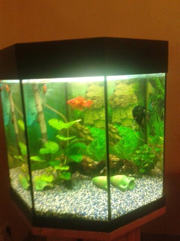 aquarium eckig  neu und gebraucht kaufen bei dhd24com