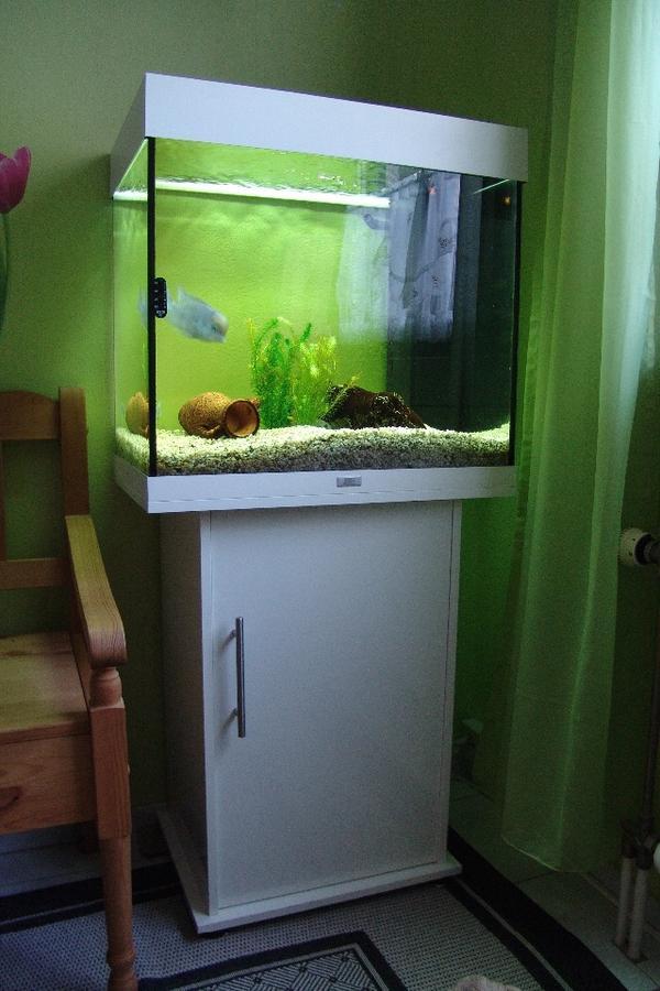 aquarium beleuchtung kleinanzeigen tiermarkt deine. Black Bedroom Furniture Sets. Home Design Ideas
