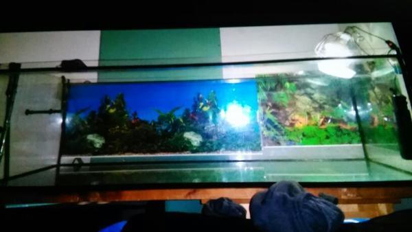 600l aquarium neu und gebraucht kaufen bei for Aquarium 600l