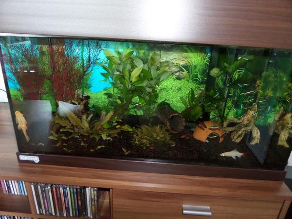 aquarium komplett in maisach fische aquaristik. Black Bedroom Furniture Sets. Home Design Ideas