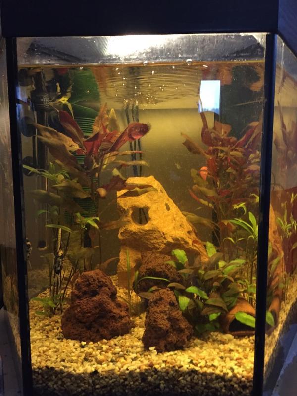 aquarium komplett set in m hlacker fische aquaristik. Black Bedroom Furniture Sets. Home Design Ideas