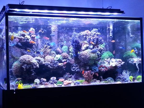 aquarium meerwasser 800l fische aquaristik. Black Bedroom Furniture Sets. Home Design Ideas