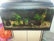 Aquarium mit zubehor