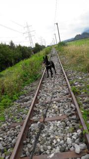 Besonderer Hund sucht