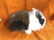bezaubernd süße Kaninchen