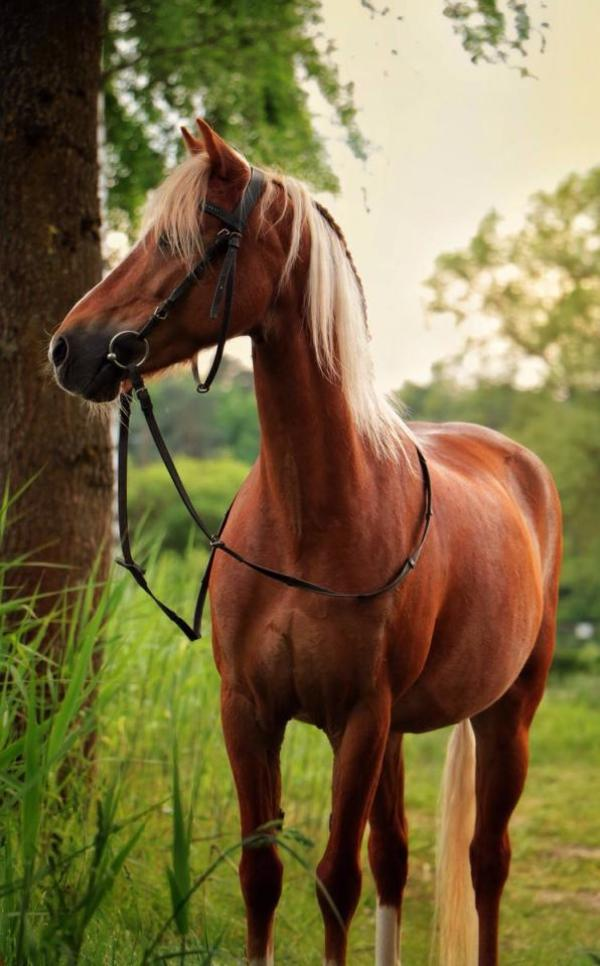 bildh bsche welsh pony stute zu verkaufen in leinburg. Black Bedroom Furniture Sets. Home Design Ideas