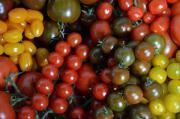 Bunte Tomaten , verschiedene