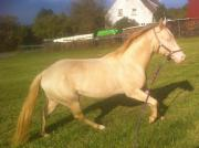 Deckanzeige* * Quarter Horse-