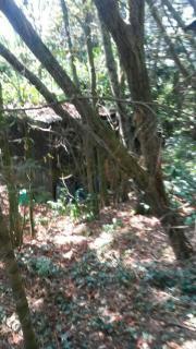 Der eigene Wald...