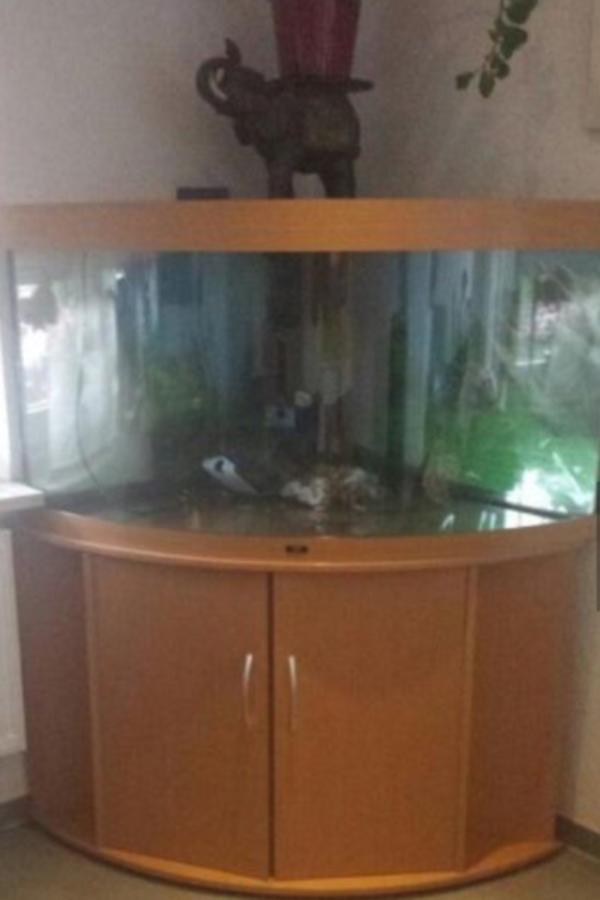 eck aquarium 360l in dornbirn fische aquaristik kaufen und verkaufen ber private kleinanzeigen. Black Bedroom Furniture Sets. Home Design Ideas