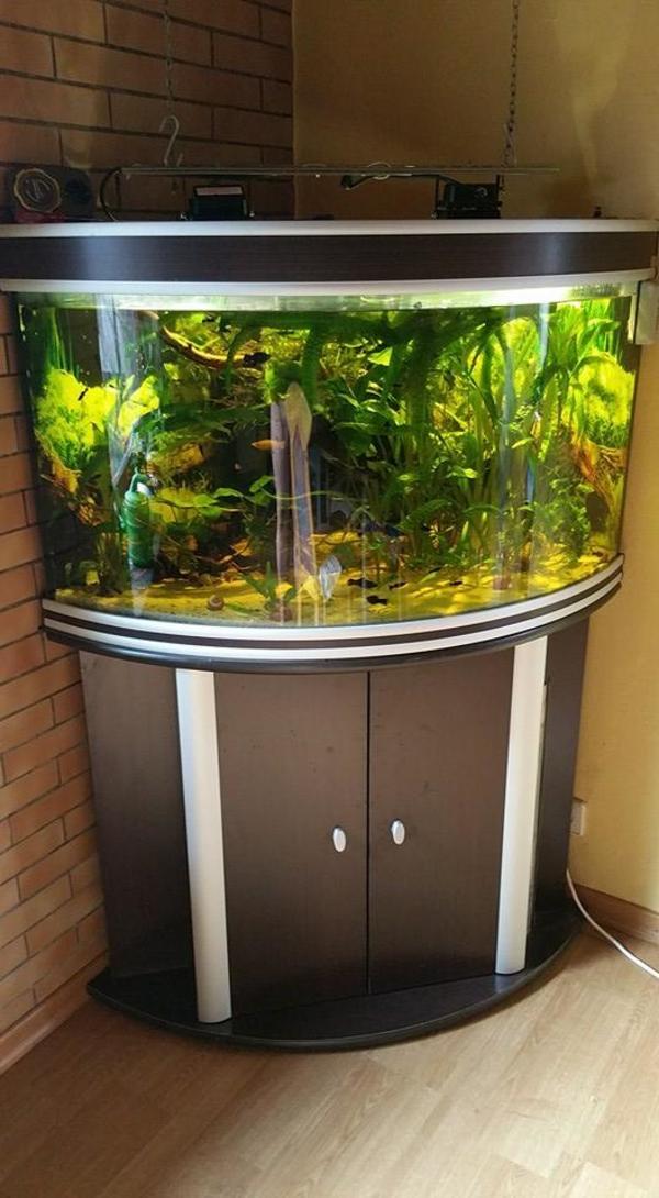 aquarium ecke neu und gebraucht kaufen bei. Black Bedroom Furniture Sets. Home Design Ideas