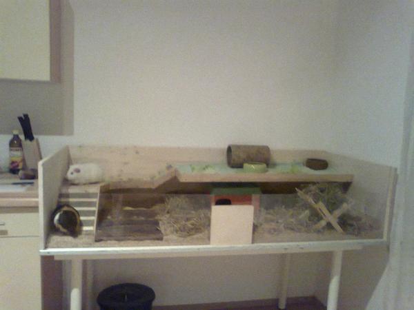 eigenbau meerschweinchen in koblenz zubeh r f r. Black Bedroom Furniture Sets. Home Design Ideas