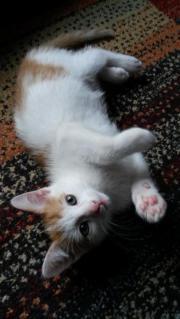 ein kätzchen (männlich)
