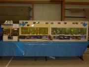 Fisch - und Pflanzenbörse