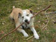 fröhliche Terrier-Hündin