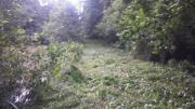 Gartenarbeiten Unkraut, Moos