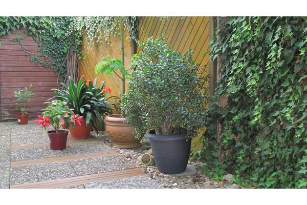 geldbaum pfennigbaum in erlensee pflanzen kaufen und verkaufen ber private kleinanzeigen. Black Bedroom Furniture Sets. Home Design Ideas