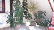 Hübsche Grünpflanzen (für