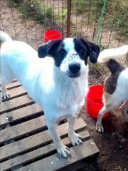 Hund, 2 Jahre,