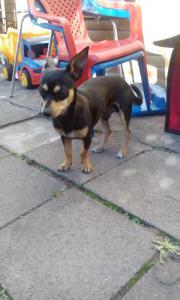 Hund zu verkaufen