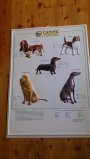 Hunde Lehrtafel in