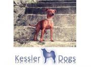 Hundeschule KESSLER DOGS