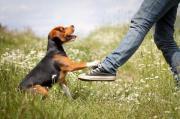 Hundetrainer Ausbildung Vollzeit