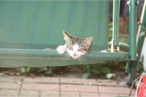 Junge katzen zu verschenken in fredenbeck katzen kaufen for Fenster zu verschenken