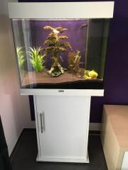 Juwel 120 Aquarium