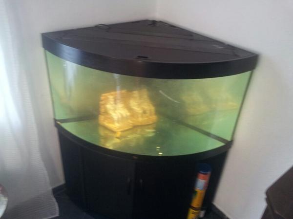 kaltwasserfische neu und gebraucht kaufen bei. Black Bedroom Furniture Sets. Home Design Ideas