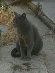 Katze Gris sucht