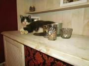 Katze vermisst :(