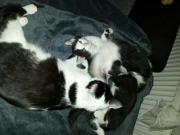 Katzen Babys 11
